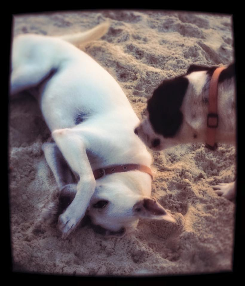 Beach time for Baby and Flauta